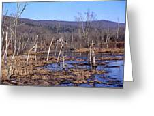 Boxely Swamp2 Greeting Card