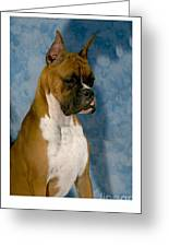 Boxer 151 Greeting Card