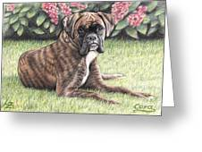 Boxer Girl Greeting Card