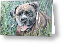 Boxer Yosi Greeting Card