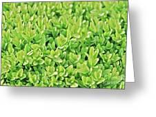 Boxwood Leaves Greeting Card