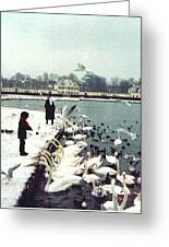 Boy Feeding Swans- Germany Greeting Card
