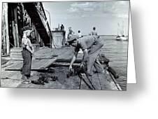 Boy Watching Fisherman Unload Lobsters Greeting Card