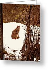 Bobcat In Snow Greeting Card