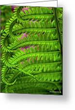 Bracken Fern Greeting Card