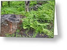Bracken Fern Meadow Greeting Card