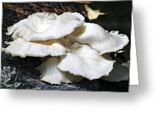 Bracket Fungus Greeting Card