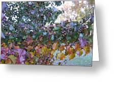 Bradford Pear Tree With Berries Greeting Card