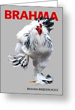 Brahma Breeders Rock Red Greeting Card