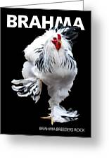 Brahma Breeders Rock T-shirt Print Greeting Card
