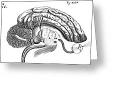 Brain And Eye, Descartes, Illustration Greeting Card