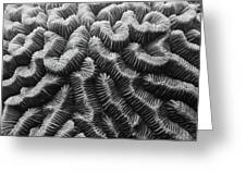 Brain Coral Details Greeting Card
