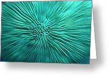 Brain Coral Greeting Card