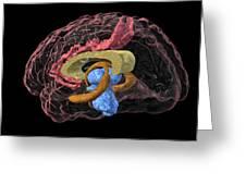 Brain Limbic System, 3-d Mri Scan Greeting Card by Arthur Togaucla