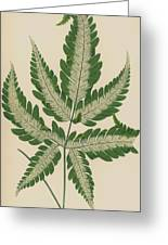 Brake Fern Greeting Card