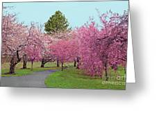 Branch Brook Cherry Blossoms II Greeting Card