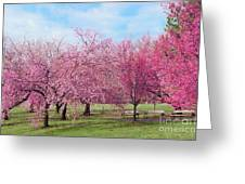 Branch Brook Cherry Blossoms Greeting Card