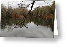 Branch And Water Greeting Card