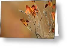 Branch Of Autumn Greeting Card