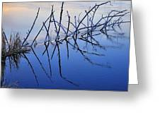Branch Reflections 484 Greeting Card