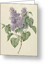 Branch With Purple Lilacs, Maria Geertruyd Barbiers-snabilie, 1786 - 1838 Greeting Card