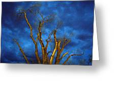Branches Against Night Sky H Greeting Card