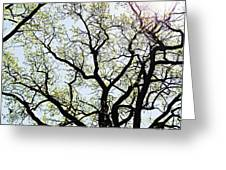 Branches Against Sky In Spring Outback Greeting Card