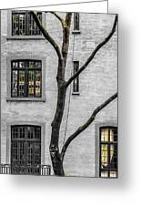 Branches And Windows Greeting Card