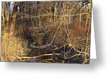 Branches Are Nature's Strings Dancing To The Rhythm Of The Wind Greeting Card
