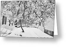 Branches In Snow Greeting Card