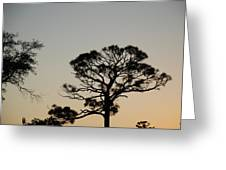 Branches In The Sunset Greeting Card