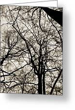 Branches Intertwined Greeting Card