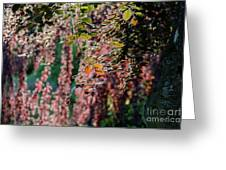 Branches Of A Tree With Colorful Leaves Shining In The Sunlight Greeting Card