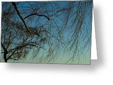 Branches Of A Weeping Willow Tree Greeting Card
