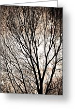 Branches Silhouettes Mono Tone Greeting Card