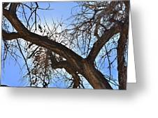 Branching Out Greeting Card