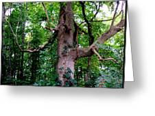 Branching Tree Greeting Card