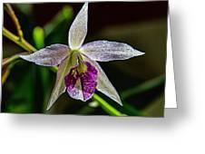 Brassocattleya Orchid Greeting Card