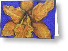Brassolaeliocattleya Hybrid Greeting Card