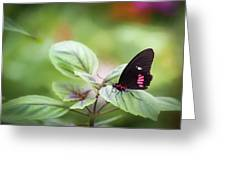 Brave Butterfly  Greeting Card by Cindy Lark Hartman