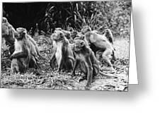 Brazil: Monkeys Greeting Card