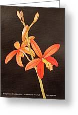 Brazilian Red Laelia-miniature Orchid Greeting Card