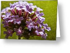 Brazillian Verbena Greeting Card