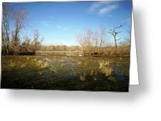Brazos Bend Winter Wetland Greeting Card