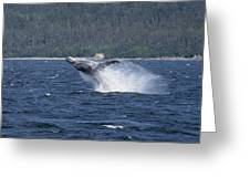 Breaching Whale Paint Greeting Card
