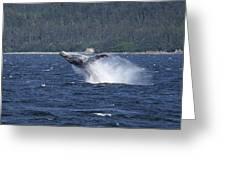 Breaching Whale. Greeting Card