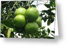 Breadfruit On The Vine Greeting Card