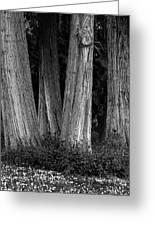 Breadth Of Trees Greeting Card