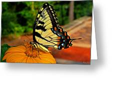 Breakfast At The Gardens - Swallowtail Butterfly 005 Greeting Card
