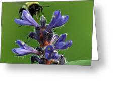 Bumble Bee Breakfast Greeting Card